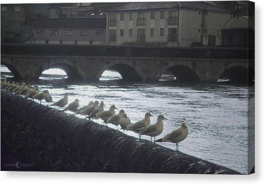 Line Of Birds Canvas Print