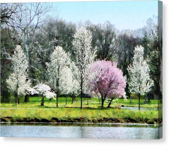 Line Of Flowering Trees Canvas Print by Susan Savad