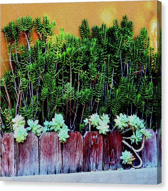 Line Of Succulents And Red Fence Canvas Print