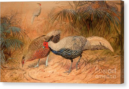 Pheasants Canvas Print - Lineated Kaleege by Joseph Wolf