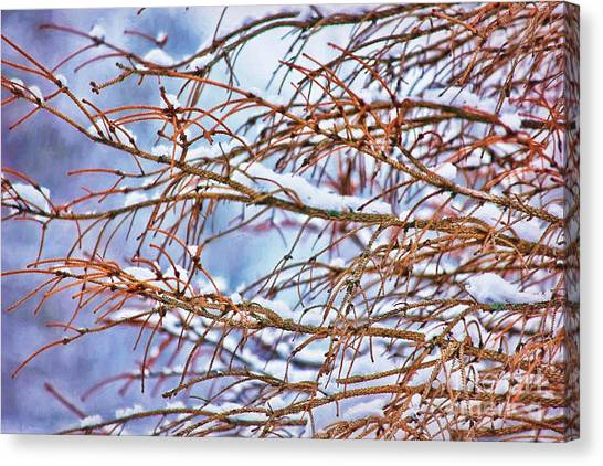 Lingering Winter Snow Canvas Print