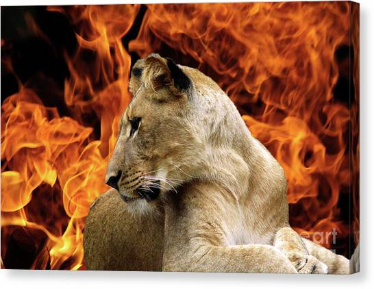 Lion And Fire Canvas Print