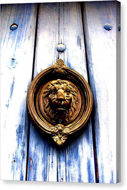 Lion Dreams Canvas Print