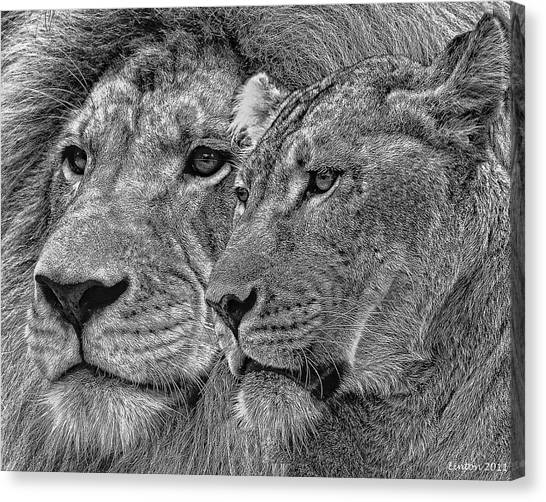 Lion King And Queen Canvas Print