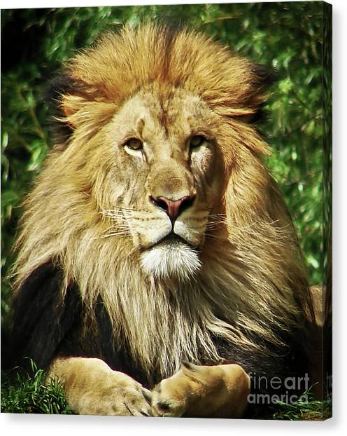 Lion King Canvas Print by Cathy Mounts