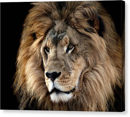 Lion King Of The Jungle 2 Canvas Print