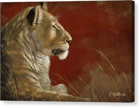 Lioness In The Shade Canvas Print