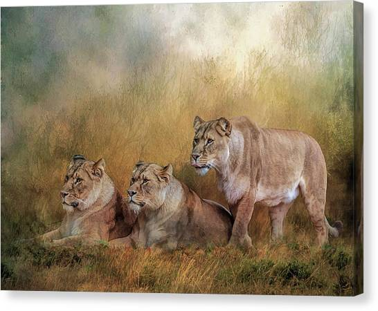 Lionesses Watching The Herd Canvas Print