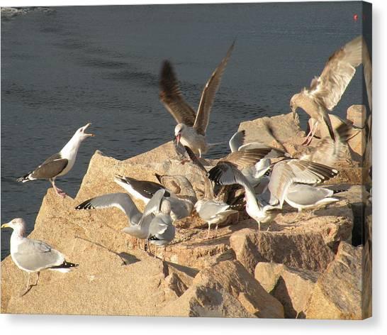 Listen Up Gulls Canvas Print by Donald Cameron