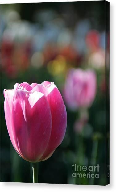 Lit Tulip 04 Canvas Print