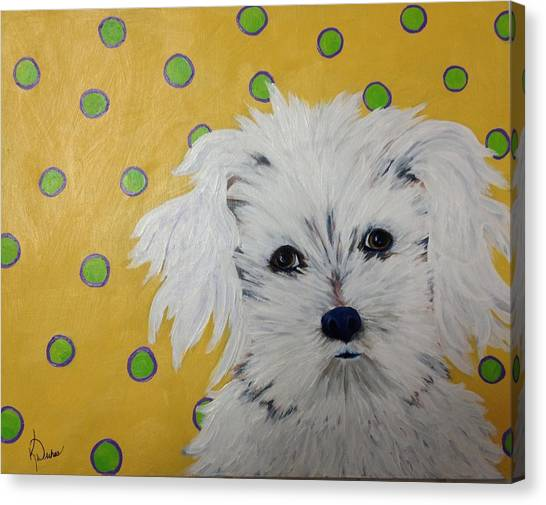 White Maltese Canvas Print - Little Bear by Karen Dukes