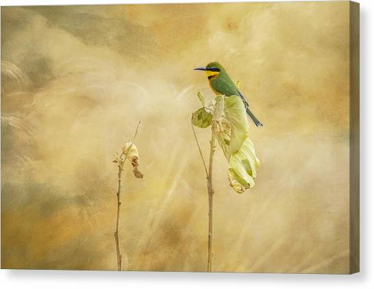Little Bee-eater Canvas Print