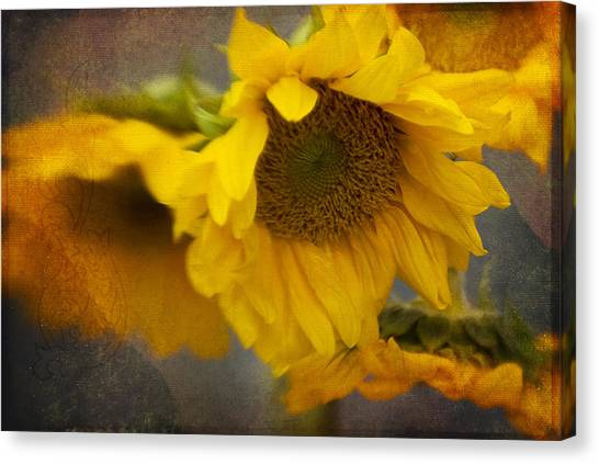 Little Bit Of Sunshine Canvas Print