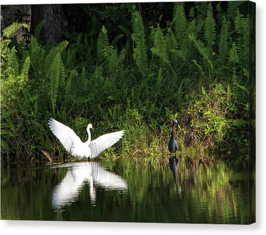 Little Blue Heron Non-impressed Canvas Print