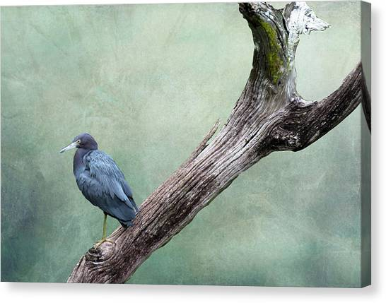 Little Blue Heron On Green Canvas Print