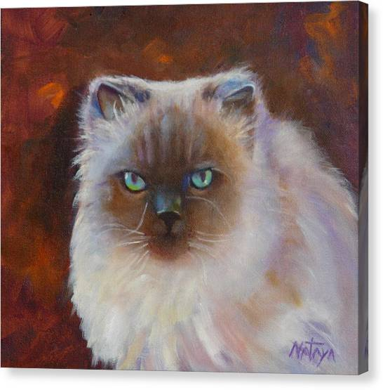 Himalayan Cats Canvas Print - Little Buddha Boy by Nataya Crow