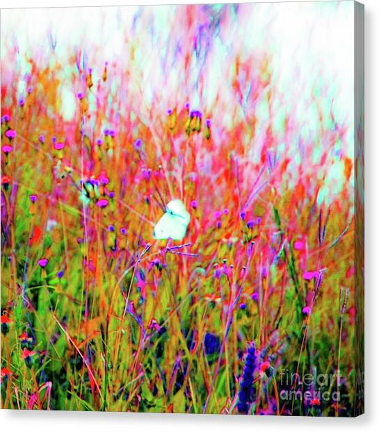 Little Butterfly Fly Canvas Print
