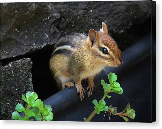 Little Chipmunk  Canvas Print
