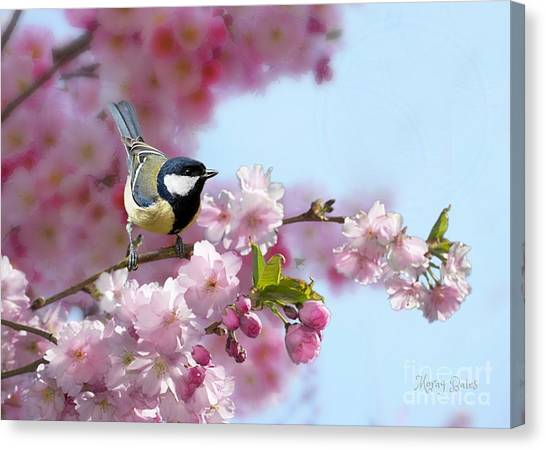 Little Coal Tit Canvas Print
