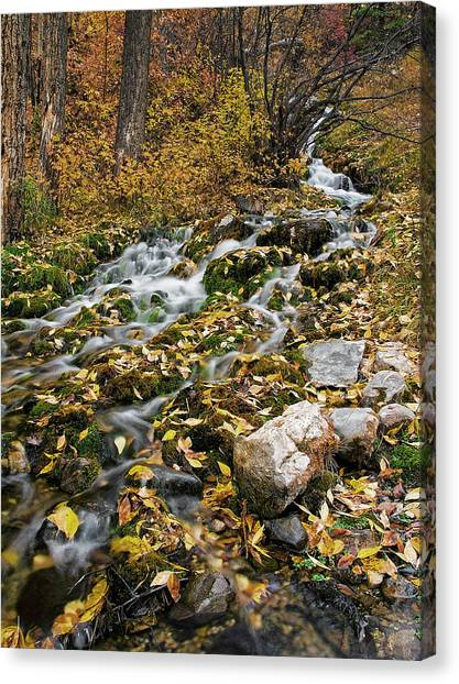 Little Creek Canvas Print