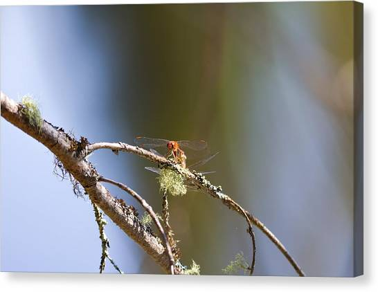 Little Dragonfly Canvas Print by Gary Smith