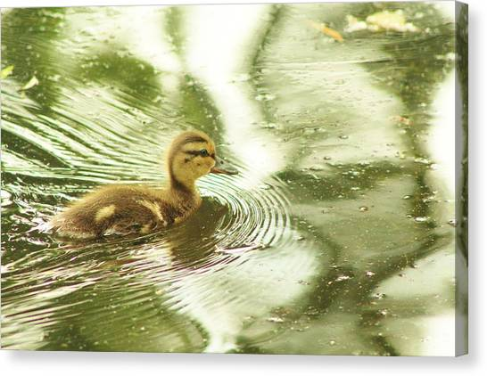 Green Duck Canvas Print