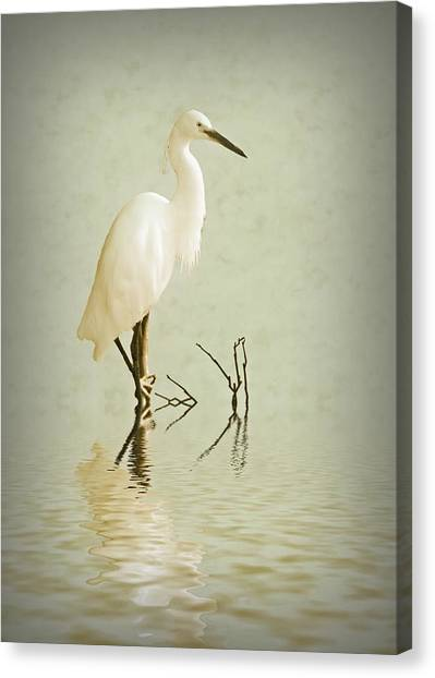 Egrets Canvas Print - Little Egret by Sharon Lisa Clarke