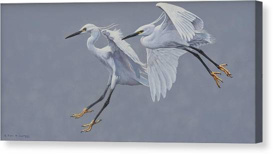 Little Egrets In Flight Canvas Print