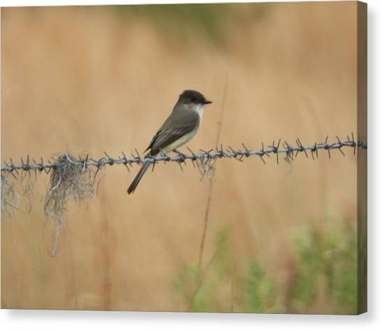 Canvas Print - Little Flycatcher On The Prairie by Red Cross