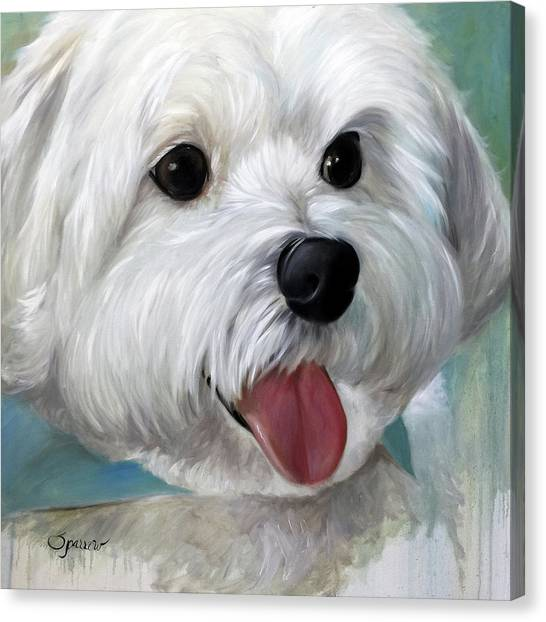 White Maltese Canvas Print - Little Gally by Mary Sparrow