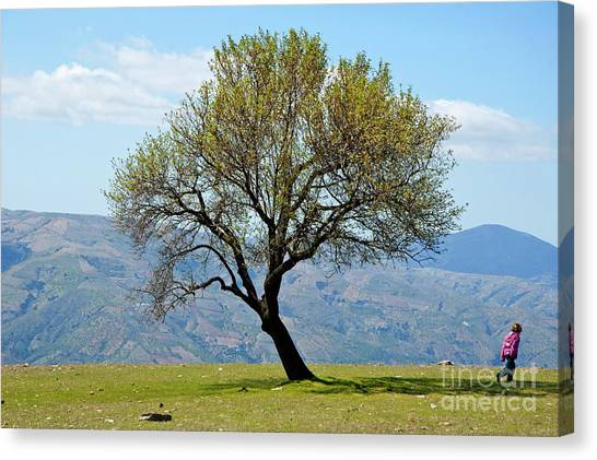 Little Girl Walking Past A Tree In Springtime Canvas Print by Sami Sarkis
