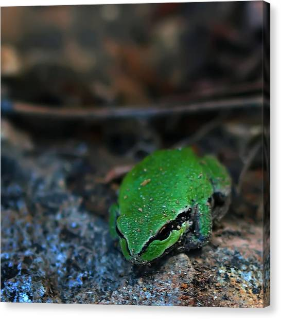 Little Green Frog Canvas Print