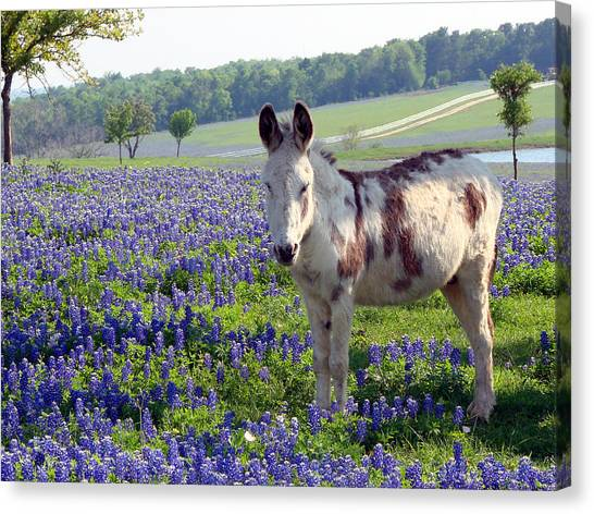Little Jesus Donkey Canvas Print