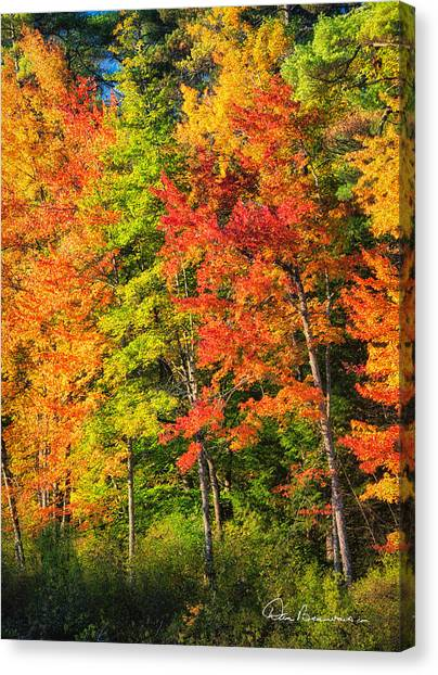 Little Lake Foliage 0515 Canvas Print