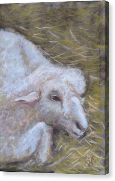 Little Lamb Canvas Print by Wendie Thompson