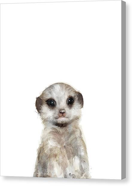 Creature Canvas Print - Little Meerkat by Amy Hamilton