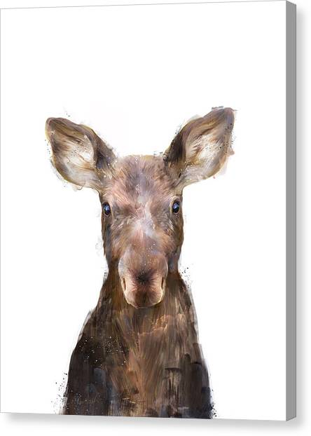 Moose Canvas Print - Little Moose by Amy Hamilton