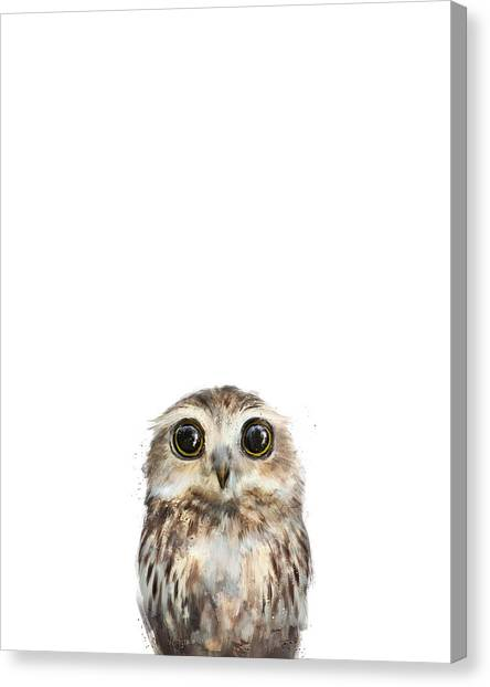 Owls Canvas Print - Little Owl by Amy Hamilton