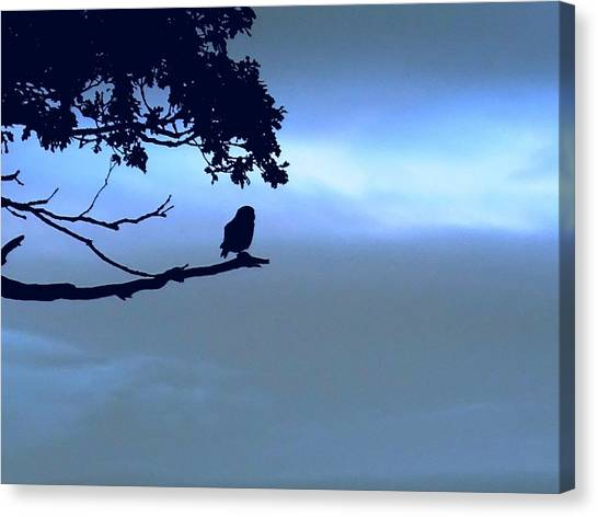 Little Owl Watching Canvas Print