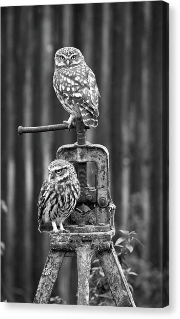 Little Owls Black And White Canvas Print