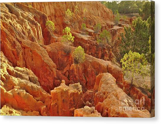 Little Pine Trees Growing On The Valley Cliffs Canvas Print