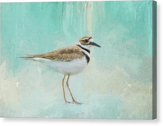 Killdeer Canvas Print - Little Seaside Friend by Jai Johnson