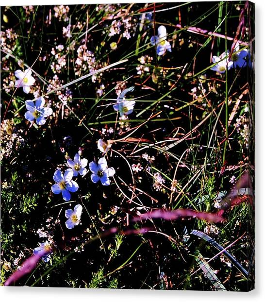 Canvas Print featuring the photograph Little Twinkles by HweeYen Ong