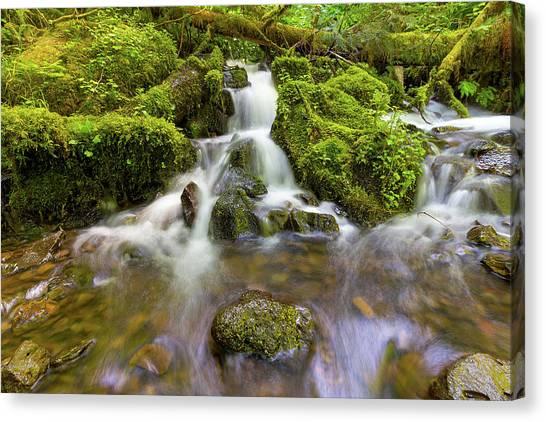 Canvas Print - Little Waterfalls Along Wahkeena Creek by David Gn