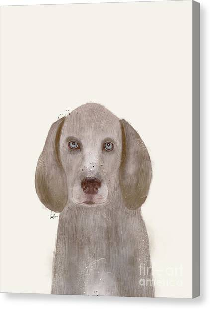 Weimaraner Canvas Print - little Weimaraner by Bleu Bri