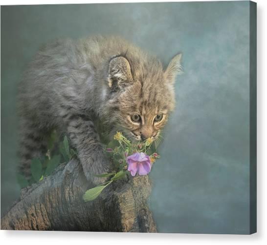 Little Wonders Canvas Print