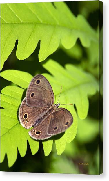 American greetings canvas prints page 15 of 221 fine art america american greetings canvas print little wood satyr butterfly by christina rollo m4hsunfo Images