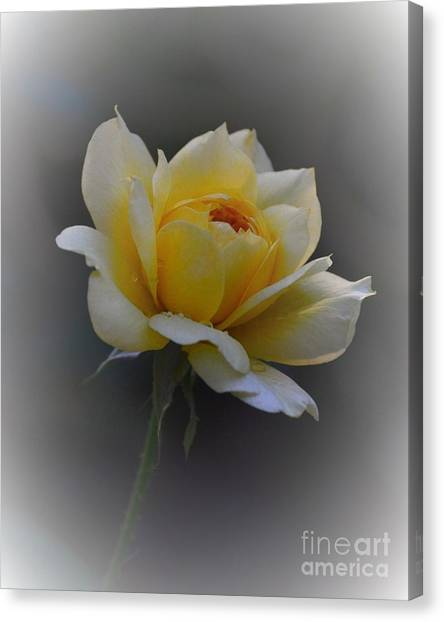 Canvas Print - Little Yellow Rose by Marilyn Smith