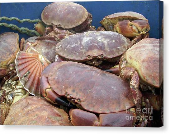 Land Crab Canvas Prints (Page #4 of 4) | Fine Art America
