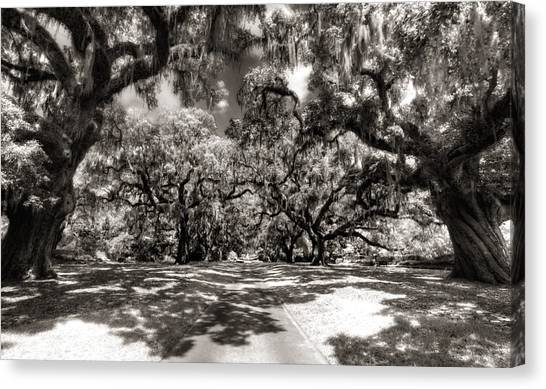 Live Oak Allee Infrared Canvas Print